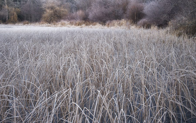 Frost Pastel  ©johncameron.ca