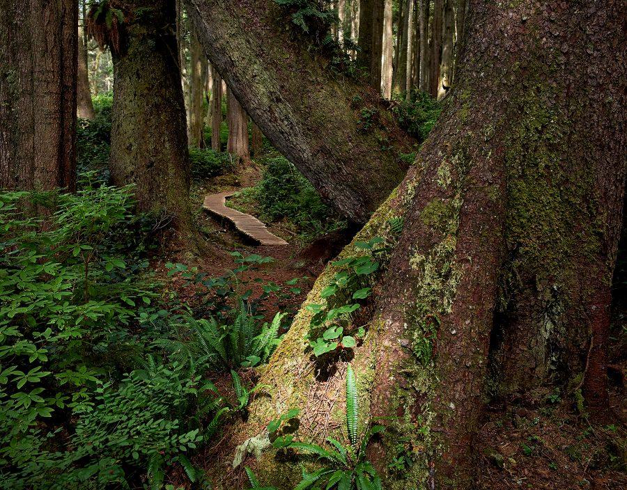 Juan-De-Fuca Trail 2 © johncameron.ca