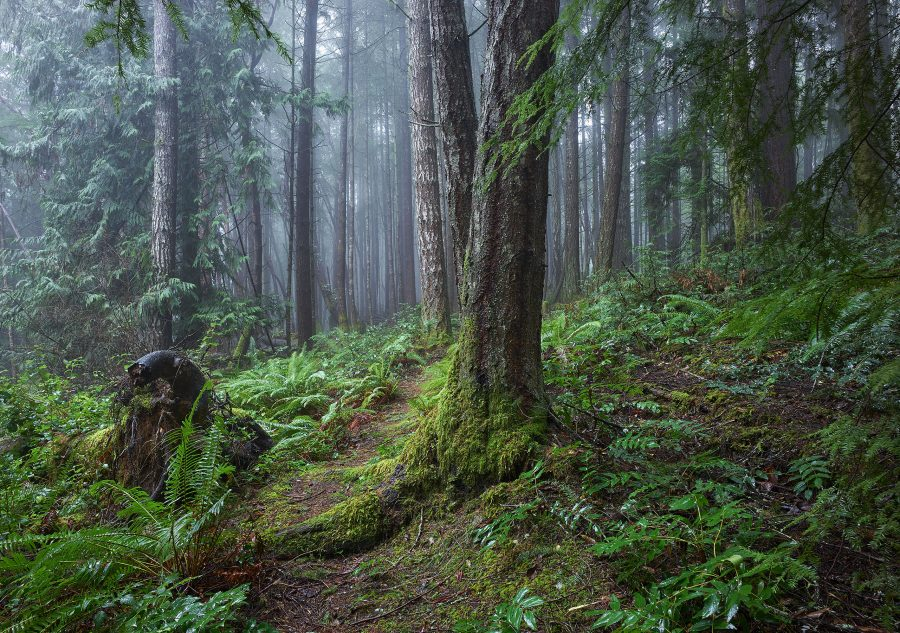 Rainforest Trail ©johncameron.ca