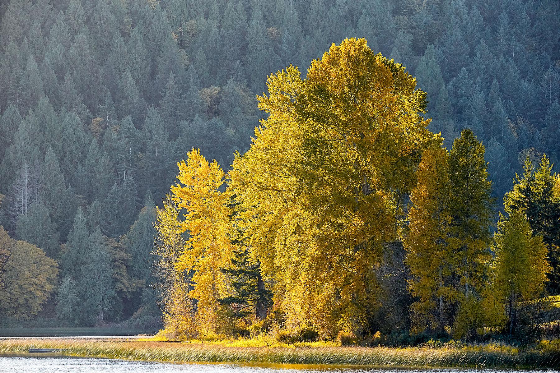 Fall at St. Mary Lake, Salt Spring Island
