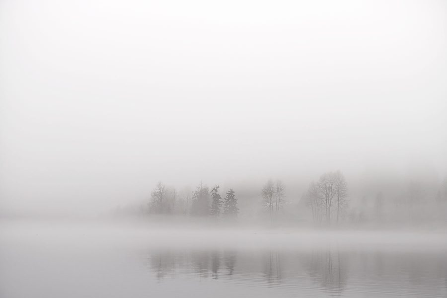 Winter Trees ©johncameron.ca