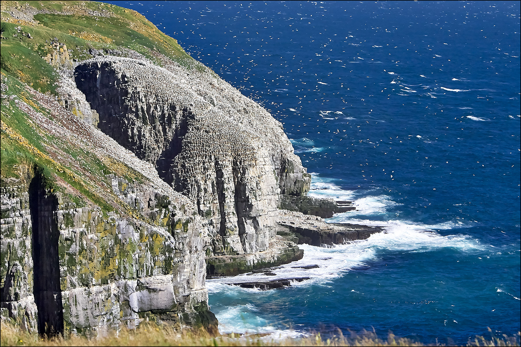 Bird Rock, Cape St. Mary's Ecological Reserve