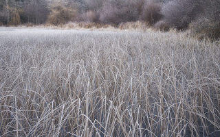 Frost © johncameron.ca