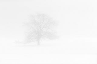 Winter Fog ©johncameron.ca