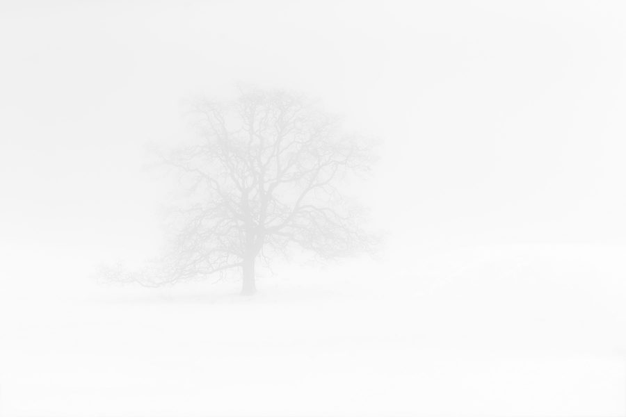 Winter Fog ©johncameron.ca