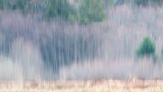 Forest Dream © johncameron.ca