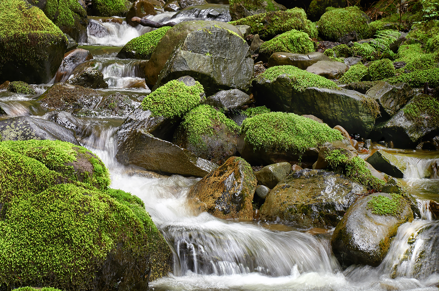 Salt Spring Island stream during a light spring rain ©johncameron.ca