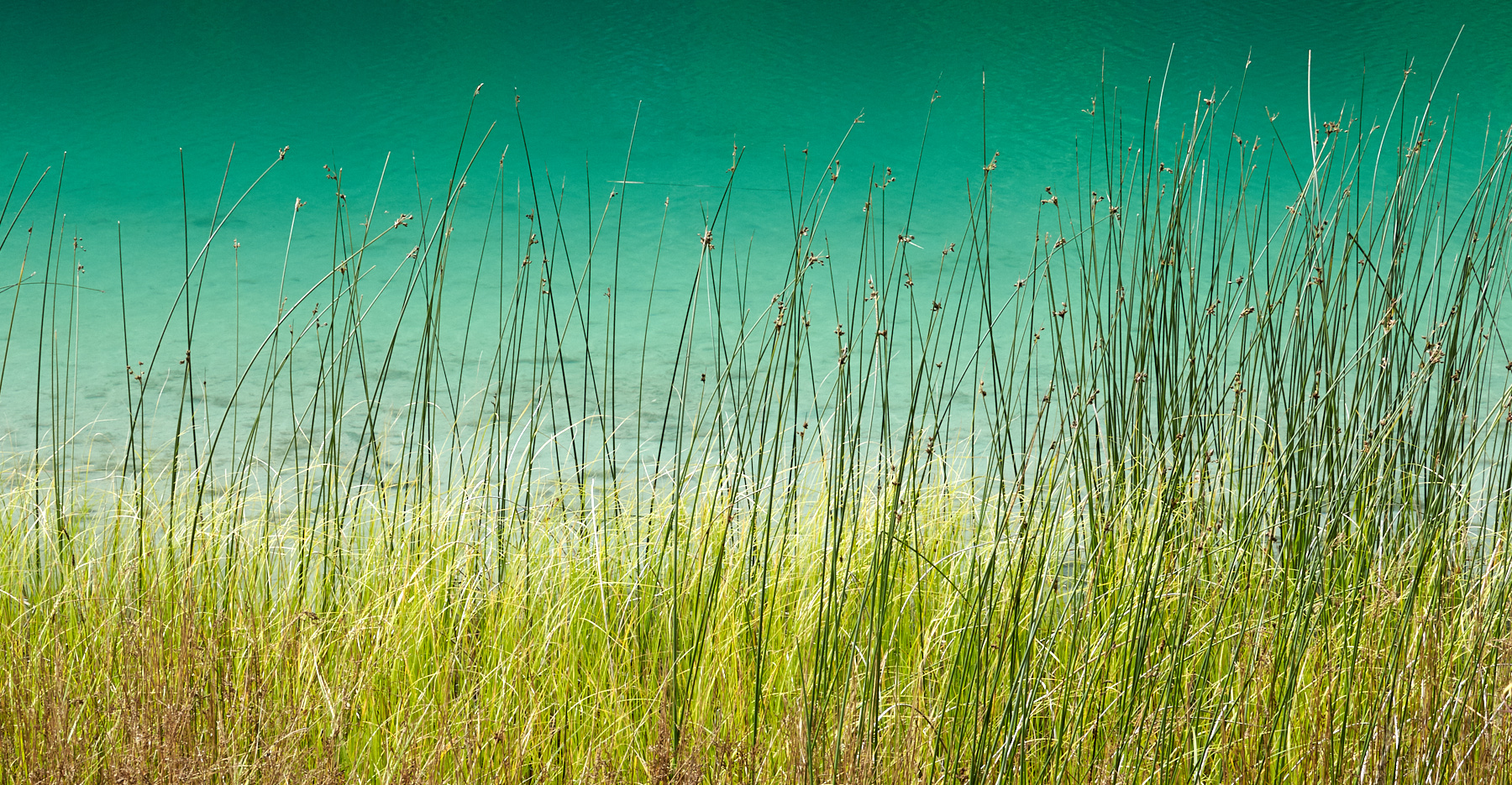 Alleyne Lake Green © johncameron.ca